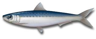 Жирная рыба