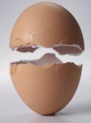 Яичный белок для роста мышц