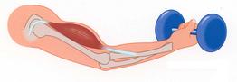 Изометрическая фаза