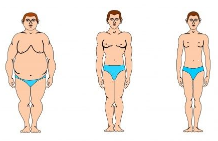 Типы тела человека