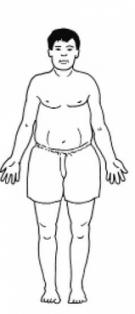 как определить тип тела