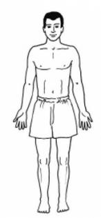 типы строения тела