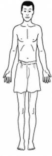 три типа тела