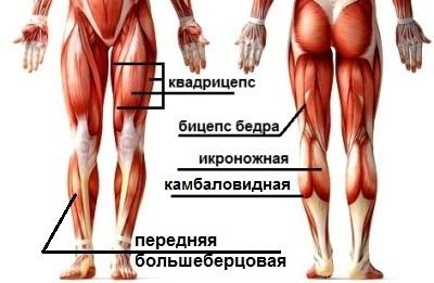 мышцы ног тренинг